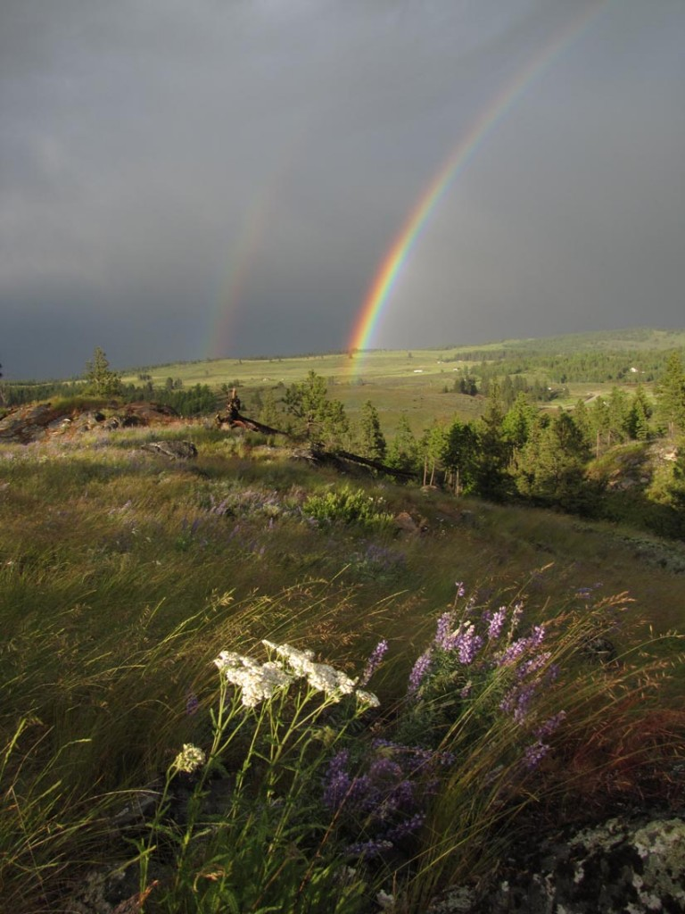Early Summer Rainbow and wildflowers